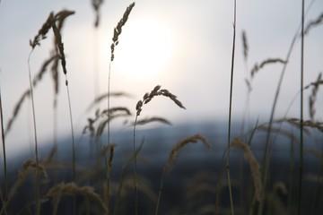Fototapeta Close-up Of Grass Against Sky