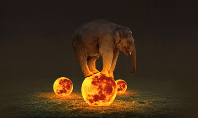 elephants stands on the moon