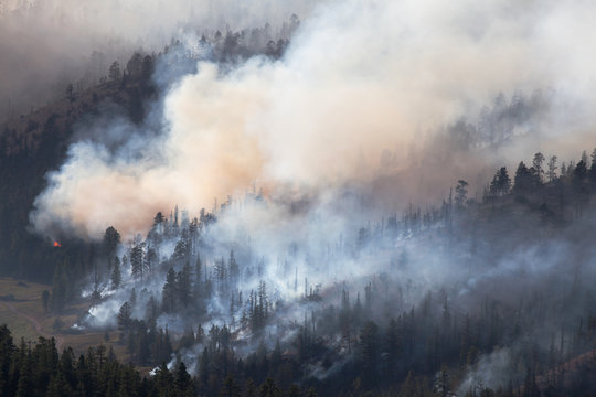 Forest Fire in Dixie National Forest