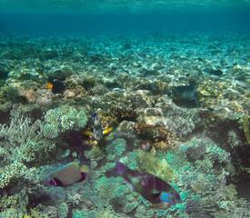 Keuken foto achterwand Koraalriffen Underwater world. Coral fishes of Red sea.