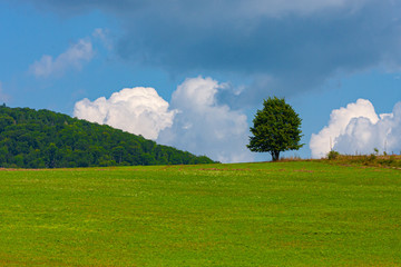 Drzewo, chmury, łąka, niebo #2