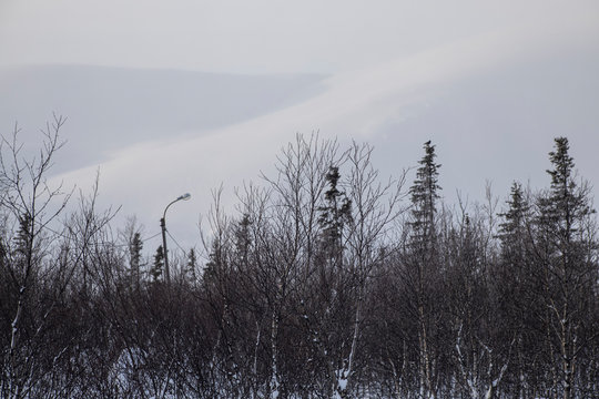 Winter forest on the background of snowy mountains. The landscape to the North of the country