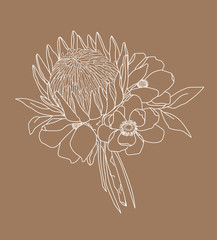 Boho Flowers and Foliage - King Protea with Leaves, White with Brown Background