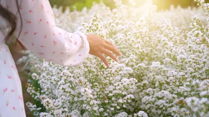 Fototapete - A woman's hand is walking and a hand holding a white flower in the flower field in the evening light