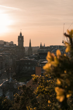 Edinburgh city center skyline with yellow flowers in the foreground