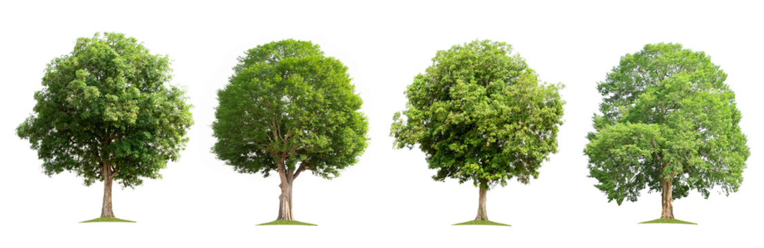 set collection tree isolate on white background