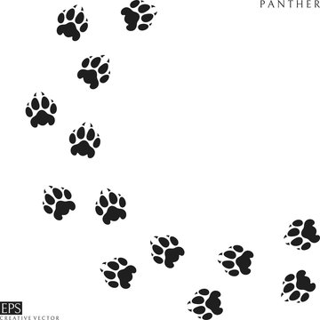 Panther paw prints. Silhouette. Wild animal. Isolated paw prints on white background