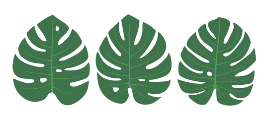 Wall Mural - Set of simple flat green decorative monstera leaves isolated on white background