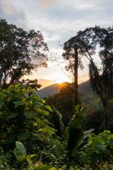 Fototapete - Dschungel in Asien