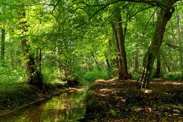 Stores photo Rivière de la forêt Ru des Vaux river in the Chevreuse valley regional nature park