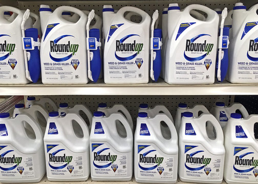 Plymouth, WI – September 18, 2018: Store shelf full of many bottles of Roundup ready to use weed and grass killer. Sprayer and refils.