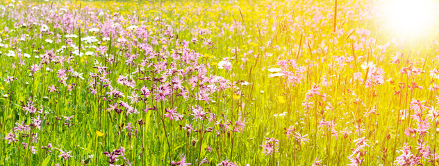 Foto auf AluDibond Gelb panoramic meadow with spring flowers and sunbeams