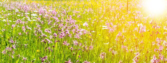 Fototapeten Gelb panoramic meadow with spring flowers and sunbeams
