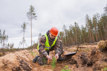 An environmentalist with a computer records the planted seedlings. A forester checks the condition of the trees. Forestry. forest work. Real people work.