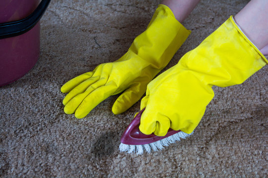 Women's hands in yellow gloves, wash the stains on the carpet