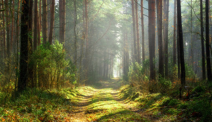 Sun beams over a path in the forest