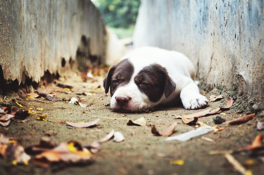 Close-up Of Stray Puppy Sleeping In Dry Gutter
