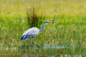 Photo Blinds Frog great blue heron