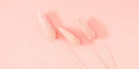 Beautiful flowers composition. Dried flowers, spikelets on pastel pink background. Floral minimal concept. Flat lay, top view, copy space
