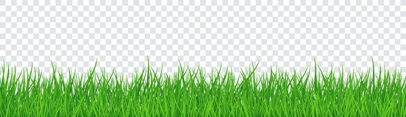 Green Grass Isolated Transparent background. Vector Illustration Wall mural