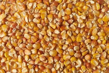 Obraz Ziarna kukurydzy rozsypana na całej powieżchni, zbliżenie makro - fototapety do salonu