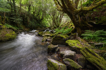 Mossy Rocks and Old Hollow Tree Oaks next to a River