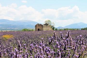 Papiers peints Lavende provence francaise