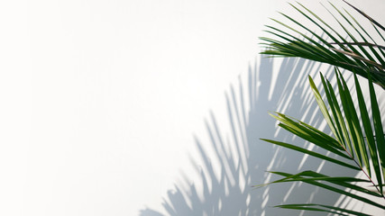 Wall Mural - Tropical palm leaves with shadows on white concrete wall abstract blurred tropical background..