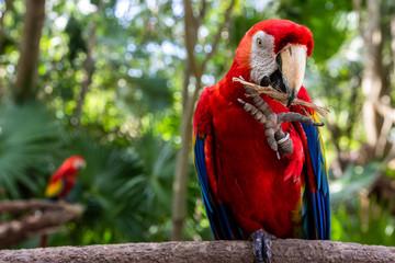 Tropical Macaw Fototapete