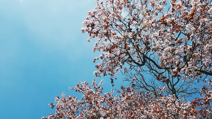 Low Angle View Of Flower Tree Against Sky Fototapete