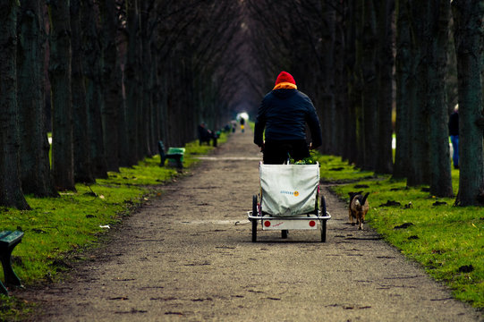 Rear View Of Man Riding Tricycle On Pathway Amidst Bare Trees At Park