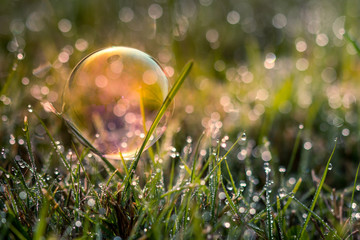 Soap bubble in grass at golden hour