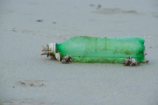 Close-up Of Gooseneck Barnacles On Green Bottle