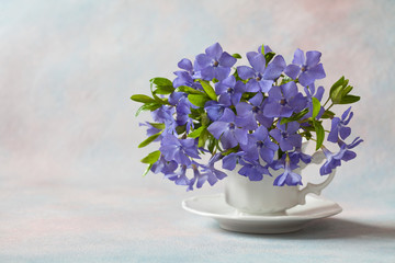 Bouquet of spring blue flowers of periwinkle in a mug on a light background