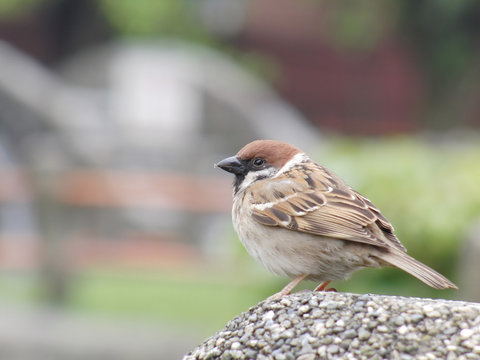 Close up shot of the beautiful Sparrow