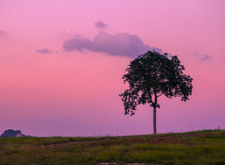Silhouette Tree On Field Against Sky During Sunset
