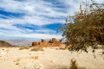 Sphinx in desert of the Negev in geological nature park Timna 25 km north of Eilat - famous tourist resort city in Israel