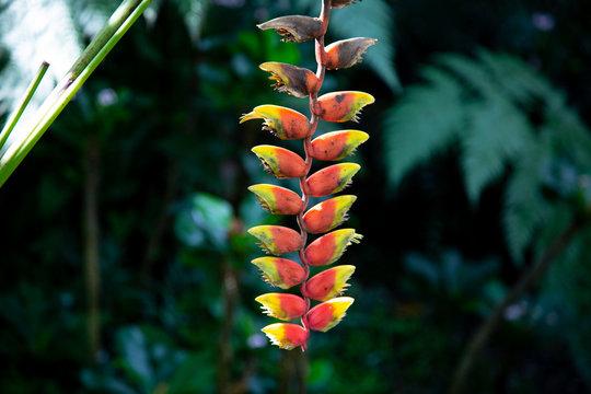 tropical plant in the jungle Nadi Fiji