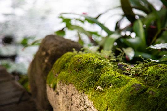 Moss garden, close up in Nadi Fiji