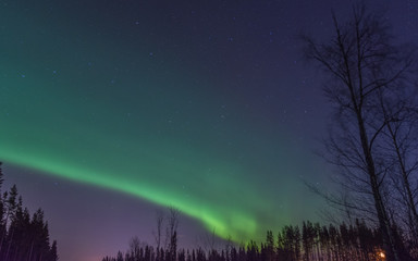 Trees In Forest Against Aurora Borealis At Night