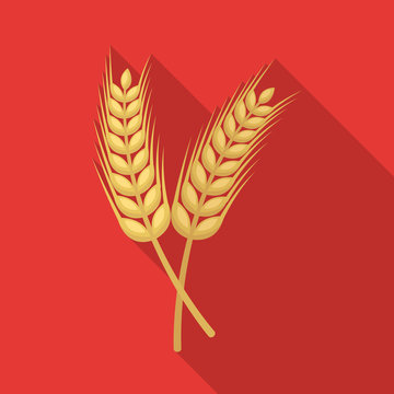 Isolated object of wheat and stalk icon. Collection of wheat and gold vector icon for stock.