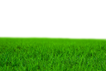 Photo of lawn or grassland.  芝生または草原の写真