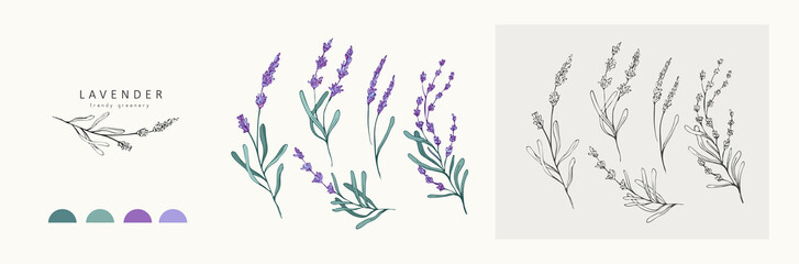 Lavender logo and branch. Hand drawn wedding herb, plant and monogram with elegant leaves for invitation save the date card design. Botanical rustic trendy greenery Fototapete