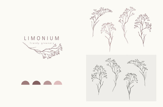 Limonium, babys breath logo and branch logo and branch. Hand drawn wedding herb, plant and monogram with elegant leaves for invitation save the date card design. Botanical rustic trendy greenery
