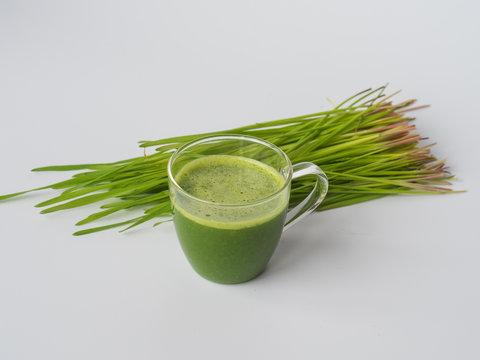 Wheatgrass shot. Fresh juice from wheat grass. Trend of health