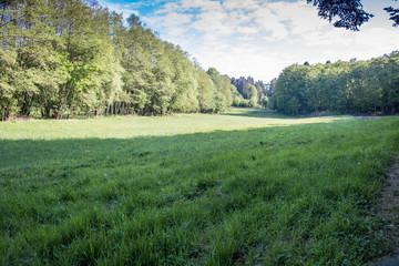 Waldlandschaft im Hotzenwald, Germany