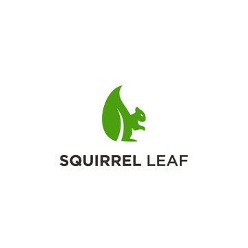 squirrel leaf logo icon vector designs