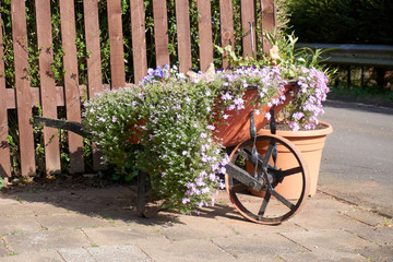 Flowers in an old red wheelbarrow of iron.