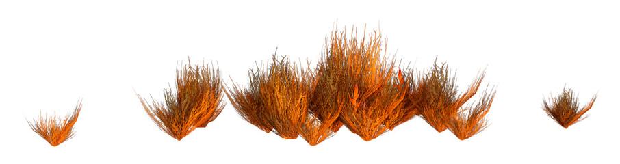 Obraz 3D Rendering Alien Grass on White - fototapety do salonu