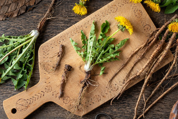 Fototapeta Whole dandelion plant with root, top view